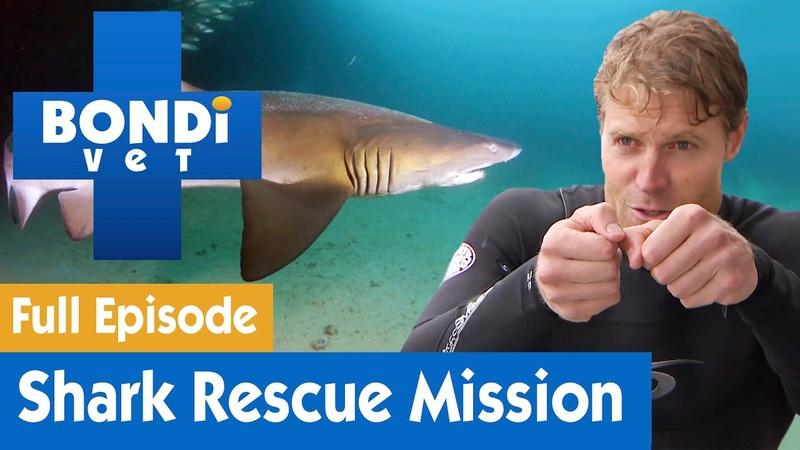 Ветеринар Бондай Бич Миссия по спасению акулы 7 сезон 15 серия Dr Chris Brown's Shark Rescue Mission S07E15 Bondi Vet
