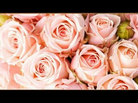 Персиковые розы 1 Алмазная мозаика