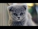 Смешные кошки приколы про кошек и котов 2018 1 Самое Смешное видео - Новые приколы Funny Cats
