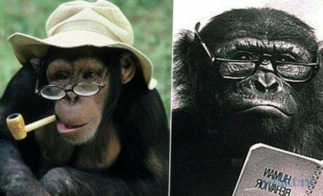 Как из обезьяны пытались сделать человека