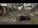 О чём мечтает бездомная собака
