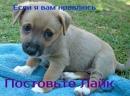 Личный фотоальбом Алины Кузьминой