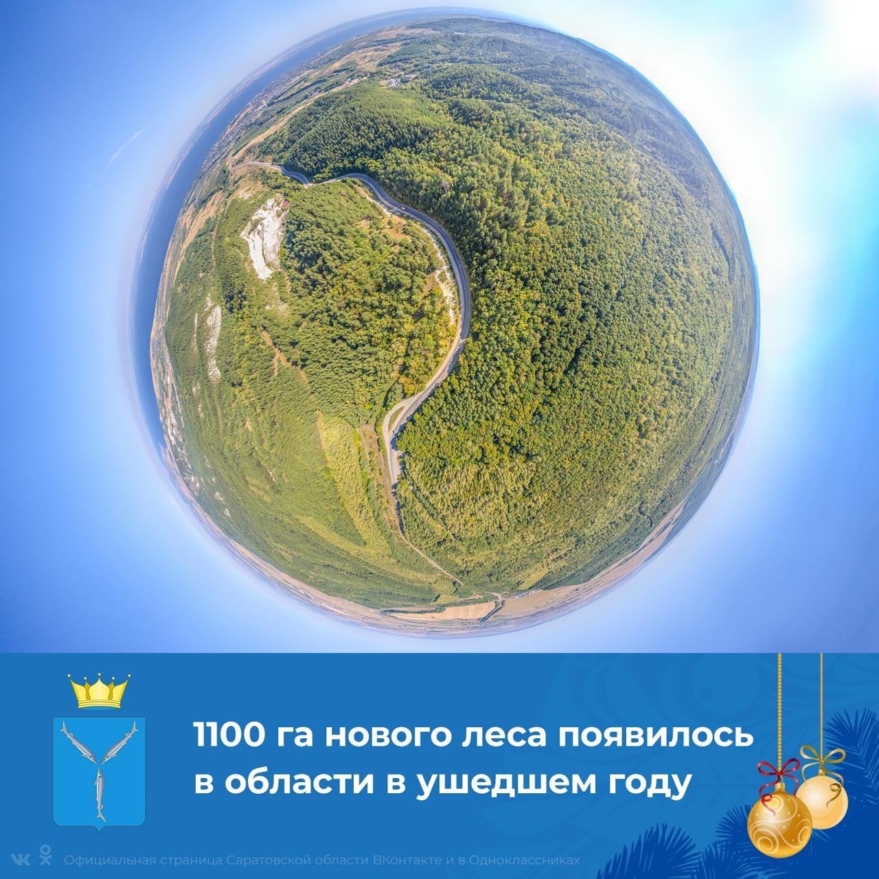 По национальному проекту Президента РФ «Экология» в 2020 году в Саратовской области лес восстановлен на площади 1 100 га