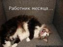 Черенова Татьяна   Гатчина   17