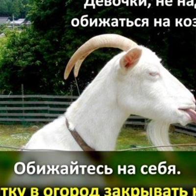 Вова Вор