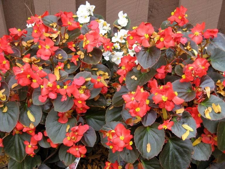 Какие цветы сажают на рассаду в феврале?, изображение №2