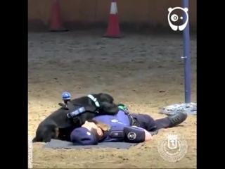 Bored Panda - This CPR-performing puppy is the most...