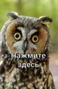 Фотоальбом Данила Крысанова