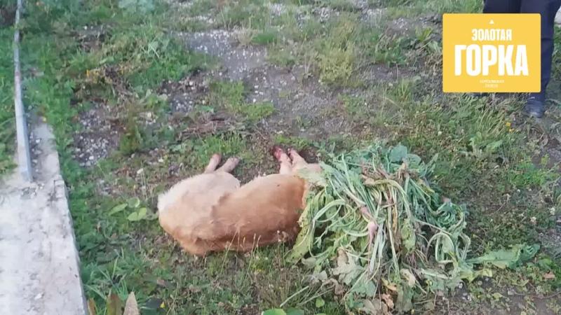 Последние мгновения жизни зарубленной собаки. Общение живодёра с соседями