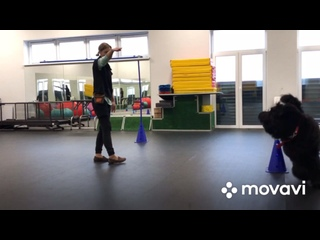 Видео от АВ-ГАВ дрессировка СПб