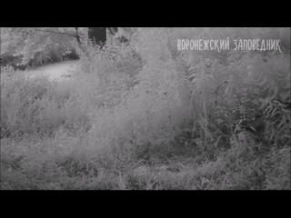 Video by Настоящий Воронеж
