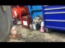 Видео от Дмитрия Свинцова