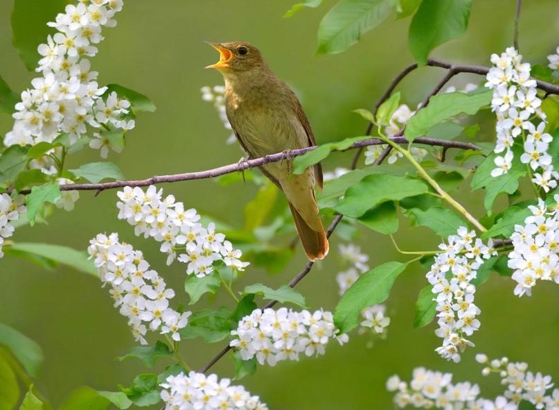 Целебное пение птиц
