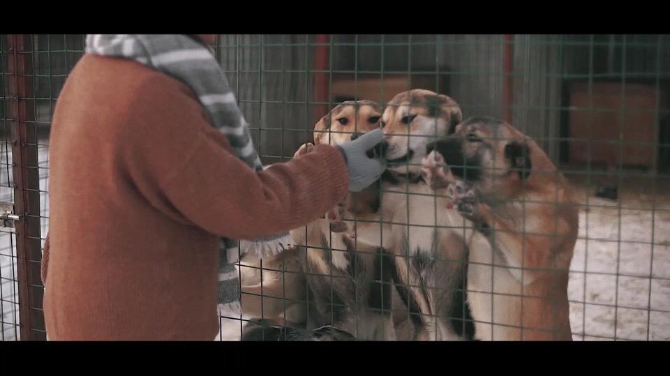 Кто испыталпривязанности кверной иумной собаке, томунет нужды