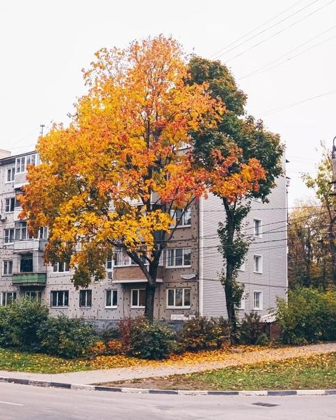 Осенние контрасты ????????  Фото: [id19831077|Дима Киреев] Тула