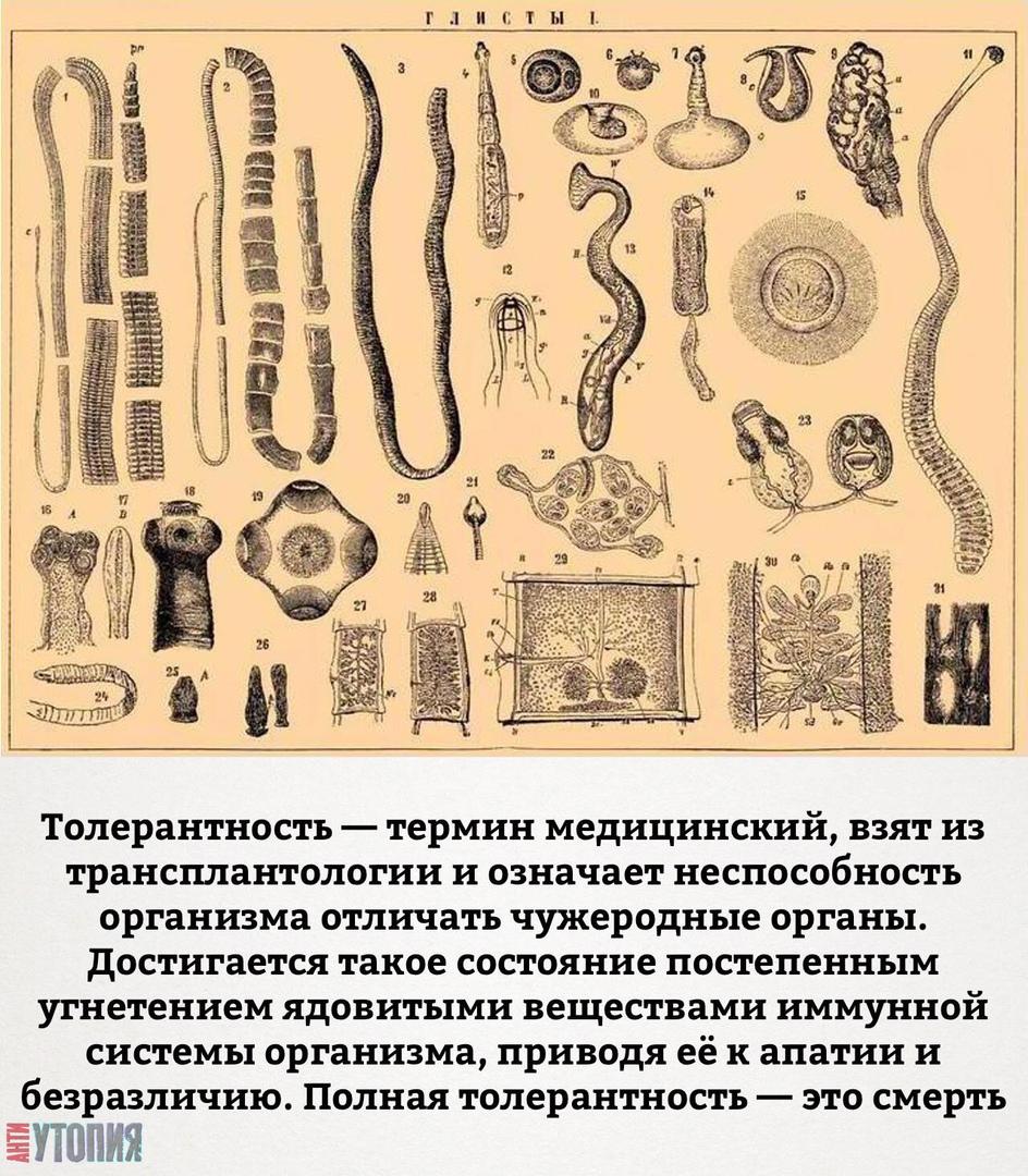 АНТИУТОПИЯ  УТОПИЯ 125587