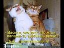 Веселые картинки. Смешные картинки котов и кошек.