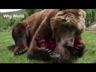 Трогательное видео о дружбе животных и людей.Топ видео Очень трогательное видео