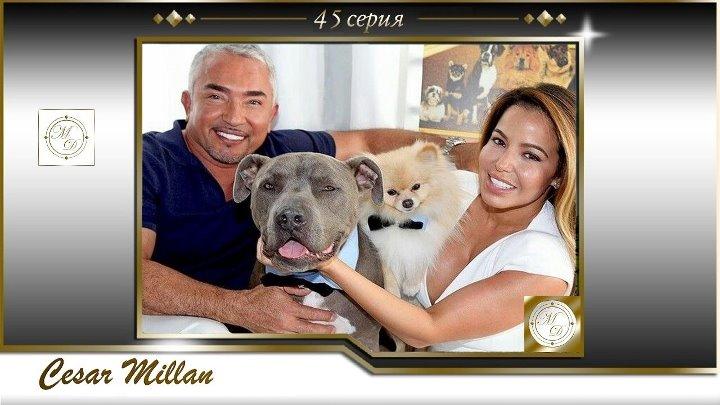 45 серия Сезар Миллан Переводчик с собачьего сила стаи