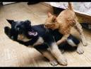 🐈Кто в доме главный🐕 Подборка приколов про котов и собак!
