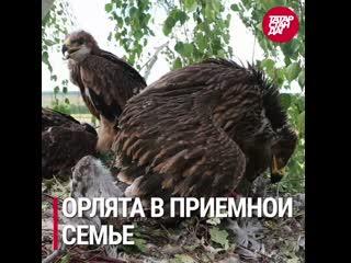 Самые обсуждаемые новости Татарстана от 20 июля 2020 года