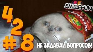 КОТЫ 2021 СМЕШНЫЕ КОТЫ 2021 КОШКИ ПРИКОЛЫ С КОТИКАМИ И КОШКАМИ Funny Cats 2021