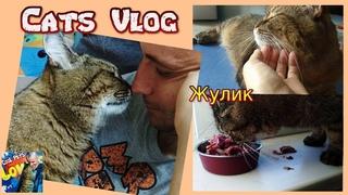 Наш корм для кошек. Сегодня очень милый кот Жулик в кадре.