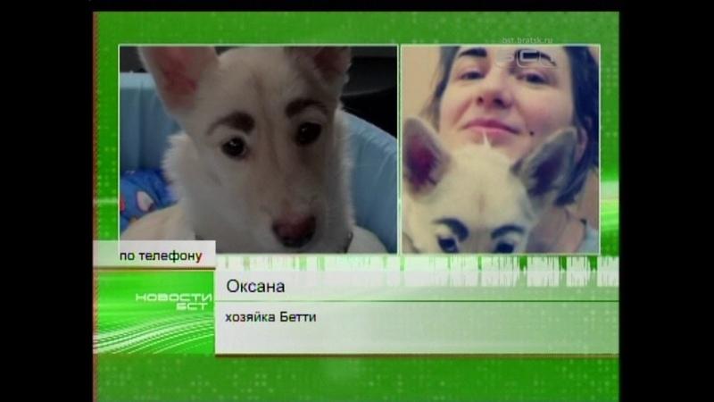 Чернобровая собака Бетти из Братска завела аккаунт в Инстаграм и поехала на передачу к Андрею Малахо