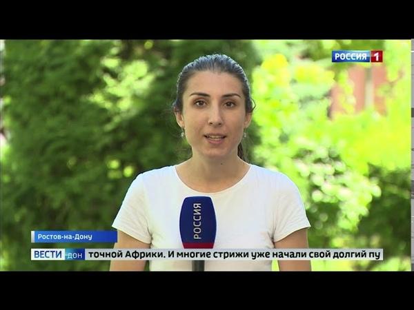 Шумные соседи летающие со скоростью более 100 км ч покидают Ростов пришло время миграции стрижей