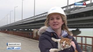 ВестиКрым.рф// Крымский мост и большой начальник кот Мостик