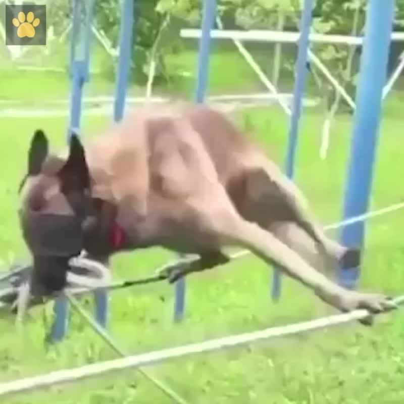 Тренируется собака-спасатель - умничка какой - vk.com/my.dacha
