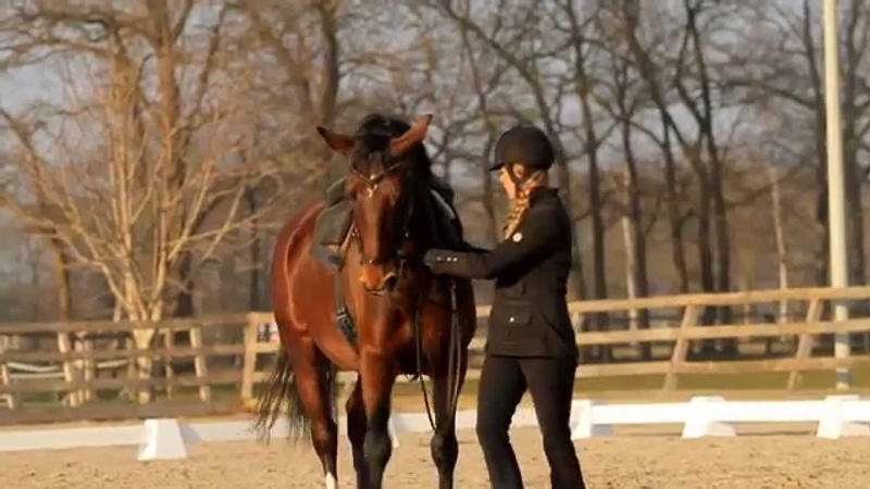 Horse Training with Greetje Hakvoort