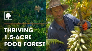 Incredible  Permaculture / Syntropic Food Forest with Over 250 Plant Species